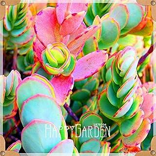 Pinkdose® Nouveaux frais 100pcs / Lot 99 types différents Succulentes jardin Lithops flores Pseudotruncatella Office de Bonsaïs, OUFN7G: 16