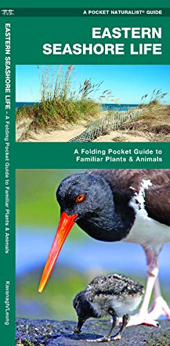 Eastern Seashore Life: A Folding Pocket Guide to Familiar Plants & Animals (A Pocket Naturalist Guide) (Star Pocket Ri)