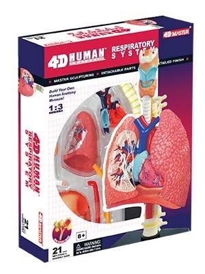 [해외]tedco 장난감 26082 4d 인간적 인 해부학 호흡기 체계 모형 / Tedco Toys 26082 4D Human Anatomy Respiratory System Model