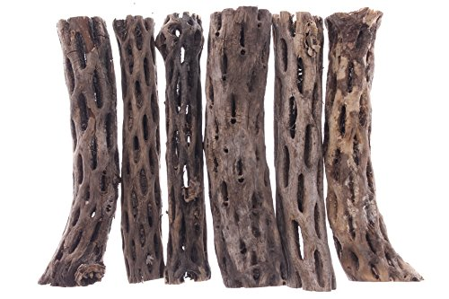 Natural Cholla Wood for Shrimp Fish Hamsters Hermit Crabs Guinea Pigs Reptiles Plants Crafts Aquarium Decoration (6 inch, 6 pieces) by Potomac Banks