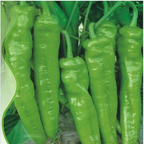 ADB Inc Anhui Green Long Sweet Cow-horn Pepper F1 Seeds, Original Pack, 35 Seeds