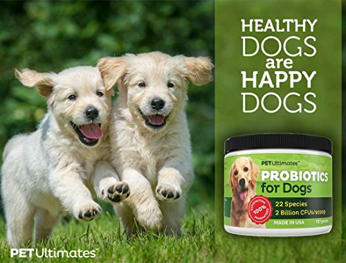 Buy canine probiotics