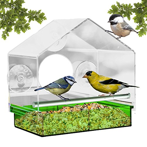 Window Bird Feeder with Strong Suction Cups Attracts Wild Birds, See Through Design and Colored Removable Tray, 3 EXTRA Suction Cups, Squirrel Proof - 100% Guarantee by Outdoor Amor (Green)