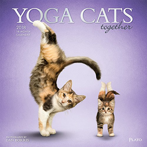 Yoga Cats Together 2018 12 x 12 Inch Monthly Square Wall Calendar with Foil Stamped Cover by Plato, Animals Humor Cats (Yoga Calendar Cat)