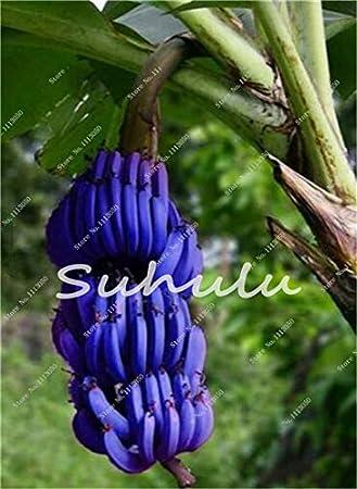 Generic Fresh 100 pcs SEMILLAS de fruta de pl/átano para plantar Amarillo