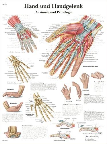Hand und Handgelenk - Anatomie und Pathologie: Amazon.de: Collectif ...