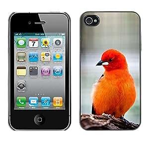Design Hard ShellOrange Red Furry Beak For Apple Iphone 4/4S Case Cover