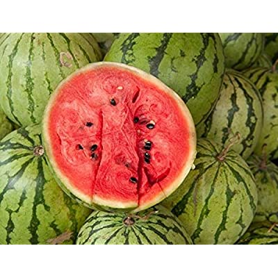 Crimson Sweet Watermelon Seed - Red Flesh Melon Garden Treated Seeds (2g to 30g), 10 Gram : Garden & Outdoor
