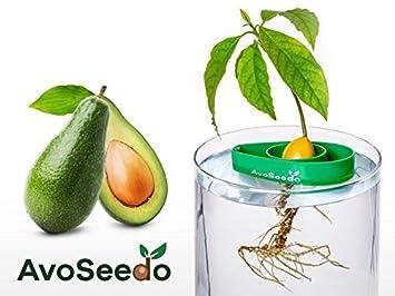 AvoSeedo Besondere Garten Geschenk   Pflanzen Sie Ihren Eigenen  Avocadobaum. Kleine Geschenke Für Frauen Und