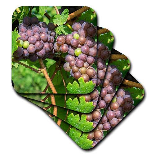 3dRose Danita Delimont - Vineyards - Grapes on vine, Skaneateles, New York, USA - set of 4 Ceramic Tile Coasters (cst_314956_3)