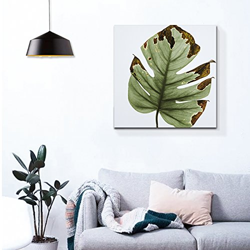 Square Giant Tropical Plant Leaf