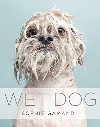 Wet Dog (Dog Wet)