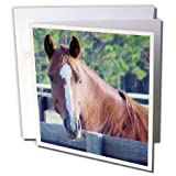 3dRose Horse - Quarter Horse Mare - 12 Greeting Cards with envelopes (gc_674_2)
