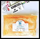 Kombucha SCOBY and pH Testing Strips Starter Set (Brindle Southern Farms) Premium Commercial Grade SCOBY to Brew 1-Gallon Batch