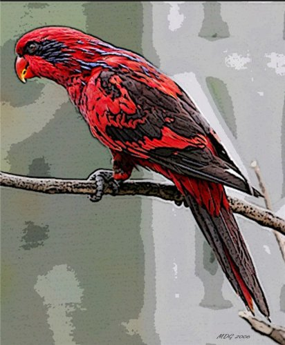 Price comparison product image Blue Streaked Lory Bird Portrait Matted Art Print - 5 in x 7 in Design - 8 in x 10 in Matted