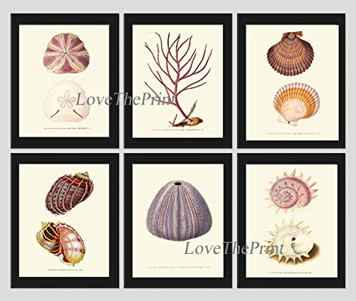 Coastal Art Print set of 6 Prints Coral Seashell Sea Shell Sand Dollar Urchin Clam Marine Ocean Nature Beautiful Antique Bathroom Bedroom Beach Home Room Wall Decor Unframed - Coral Hawaii Black