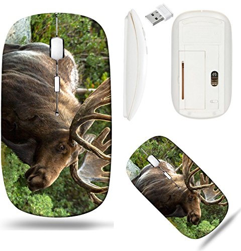 Liili Wireless Mouse White Base Travel 2.4G Wireless Mice with USB Receiver, Click with 1000 DPI for notebook, pc, laptop, computer, mac book Side view of large bull moose standing at forest edge Imag