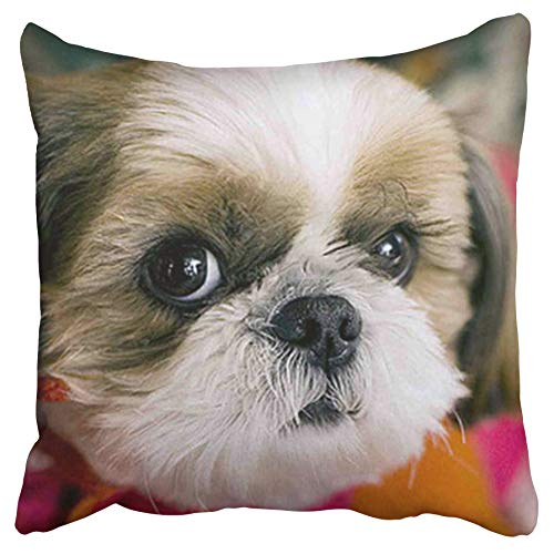 Emvency Decorative Throw Pillow Covers Shih Tzu Animal by Honest Kind Double Sided Pillowcase Cushion Cover Case Protectors Sofa 20x20 Inches