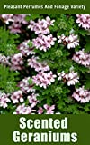 Scented Geraniums: Pleasant Perfumes and...