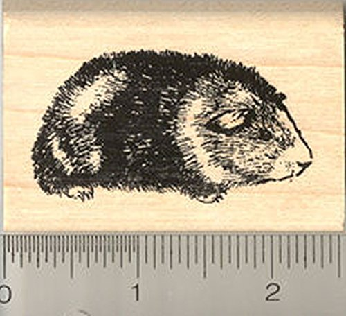 Tricolor Guinea Pig Rubber Stamp, Short Hair