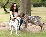 Sancho & Lola's 6-Inch Thin Bully Sticks Dogs - 7oz (10-14) Grass-Fed Free-Range Grain-Free Beef Pizzle Dog Chew Sticks
