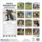 American Staffordshire Terrier Calendar - Dog Breed Calendars - 2019 - 2020 Wall Calendars - 16 Month by Avonside 5