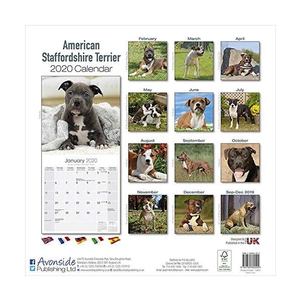 American Staffordshire Terrier Calendar - Dog Breed Calendars - 2019 - 2020 Wall Calendars - 16 Month by Avonside 2