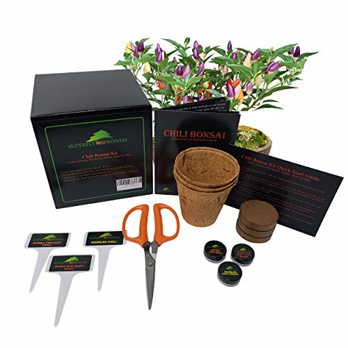 Chili Bonsai Seed Kit - Hot Pepper Bonchi Tree Starter Kit (Chili Bonsai Kit Level 1) (Hot Chili Pepper Seeds)