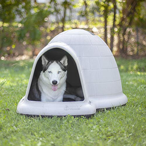 Buy outside dog house