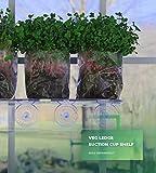 Window Garden Assorted Indoor Microgreens Seed