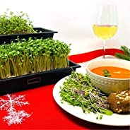 HAMAMA Home Microgreens Growing Kit, Grow Fresh Micro Greens Indoors Every Week, 30-Second Setup, Just Add Wat