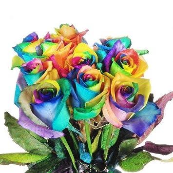 Bunte Blumen 10x Echte Regenbogen Rosen Bunt Langstielig Und