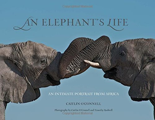 An Elephant's Life: An Intimate Portrait from (Two African Elephants)