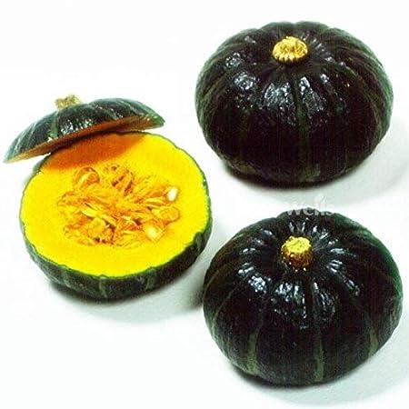 AGROBITS Mini Calabaza de jardín Verduras saludables nutritivas s ...