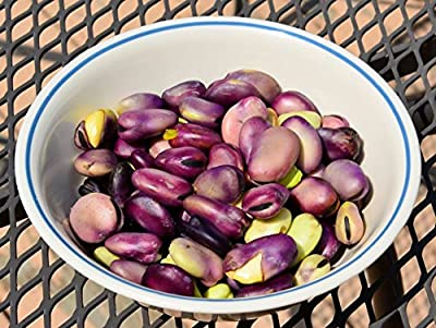 Italian Heirloom Precoce Violetto Fava Bean Seeds by Stonysoil Seed Comany