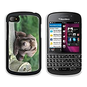 Cute Puppy sitting on a Tree Trunk This,That & What Nots BlackBerry Q10 Snap Cover Premium Aluminum Design Case Customized Made to Order
