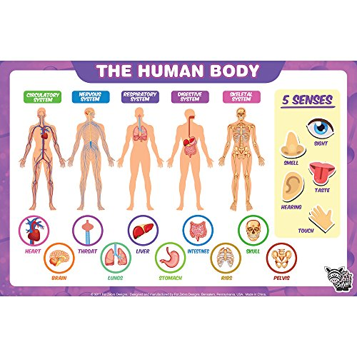 Educational Kids Placemats - The Human Body