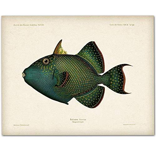 Blue Trigger Fish - 11x14 Unframed Art Print - Makes a Great Beach House Decor Under $15