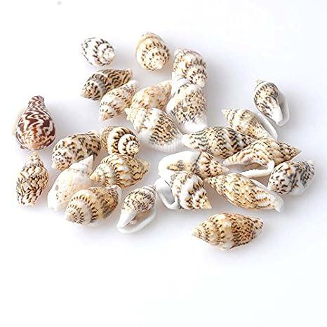 100 conchas de mar con agujero bisuteria manualidades y decoracion acuario peceras botellas baños cocinas floreros velas guirnaldas 13-16mm .de OPEN BUY: ...