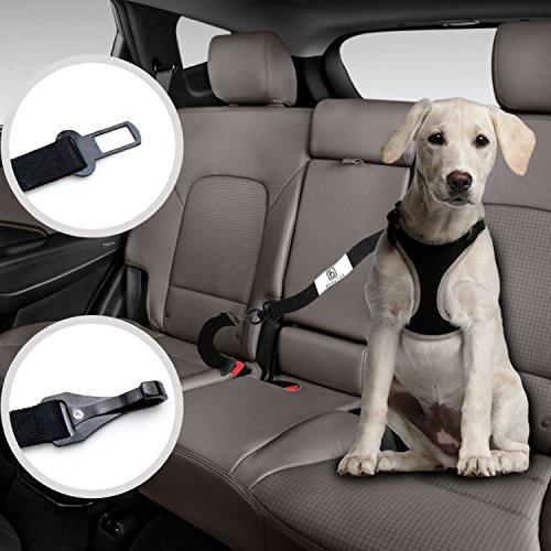 Heavy Duty Harness (Dog Seat Belt For Harness With Two Pet Cat Car Safety Leads Heavy Duty Leash Extensions, Dual Adjustable Vehicle Tether Tangle-Free Swivel Latch Bar Attachment Seatbelt Carabiner Clip by Barktus)
