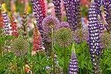 """Oregon,Salem Flowers at Schreiners Iris Garden by Don Paulson - 10"""" x 16"""" Giclee Canvas Art Print offers"""