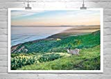 Point Reyes Marin County Photograph, Deer Picture, Northern California Seascape