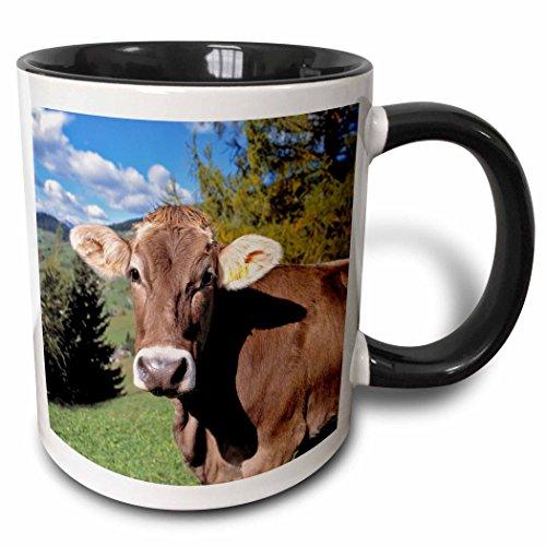 mug_82188_4 Italy, Dolomite Alps, Swiss Brown Cow EU16 RE...