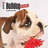 Bulldog Puppies 2018 7 x 7 Inch Monthly Mini Wall Calendar, Animals Dog Breeds Puppies
