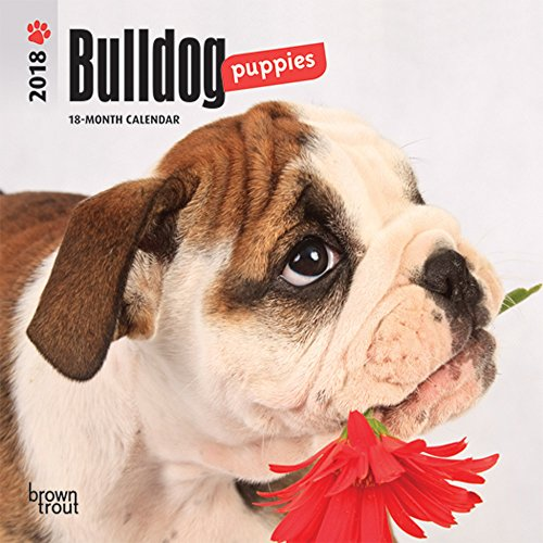 Bulldog Puppies 2018 7 x 7 Inch Monthly Mini Wall Calendar, Animals Dog Breeds Puppies (Bulldog Puppies)