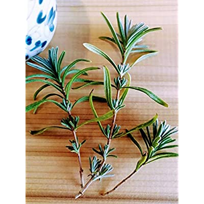 Hundredfold Organic English Lavender Lavandula angustifolia 100 Seeds - Lavender Vera, True Lavender Heirloom Non-GMO Herb : Garden & Outdoor