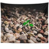 Westlake Art - Wall Hanging Tapestry - Organization Rock - Photography Home Decor Living Room - 51x60in