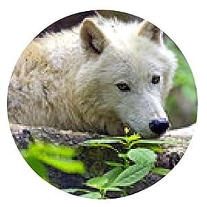 alfombrilla de ratón Lobo ártico - ronda - 20cm