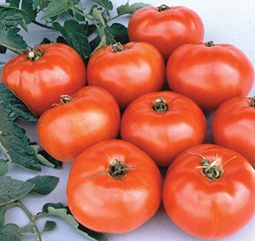 jetsetter tomato seeds - 6