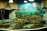The Mangrove environment at the Touch Tank display of the Oklahoma Aquarium. offers